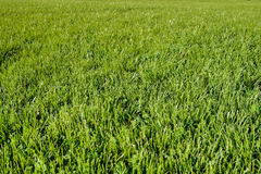 Perfect green grass lawn photo Royalty Free Stock Photography