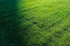 Perfect green grass lawn photo Stock Photography