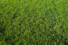 Perfect green grass lawn photo Stock Photo