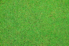 Perfect green grass texture from golf field Stock Images