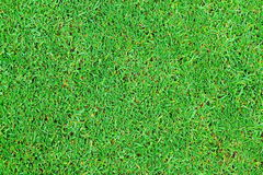 Perfect green grass texture from golf field Royalty Free Stock Image