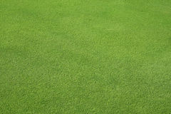 Perfect Green lawn. Golf course Royalty Free Stock Photography