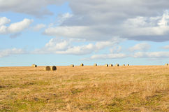 Perfect Harvest Landscape Royalty Free Stock Images
