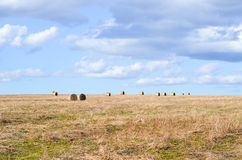 Perfect Harvest Landscape Stock Photo
