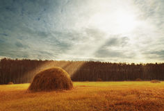 Perfect harvest landscape with straw bales amongst fields Stock Photo