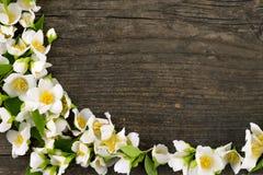 Jasmine flower on wood desk. Perfect jasmine flower frame on dark old wood desk Royalty Free Stock Image