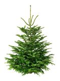 Perfect jedlinowy drzewo na czystym bielu Zdjęcia Stock
