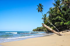 Perfect jungle caribbean beach at Costa Rica. Royalty Free Stock Images