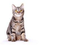 Perfect kitten looking upwards Stock Photos