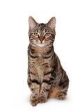 Perfect Kitten Looking Upwards Royalty Free Stock Images