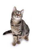 Perfect kitten looking upwards Stock Images