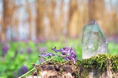 Perfect large shining crystal of transparent quartz in sunlight on spring nature. Gem on moss stump background close-up royalty free stock photos
