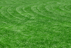 Perfect lawn. Perfect green lawn with wavy lawnmower tracks Royalty Free Stock Image