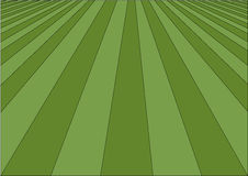 Perfect lawn Royalty Free Stock Images
