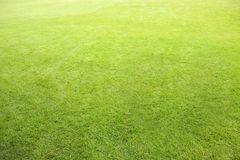 Perfect lawn background. Focused on foreground with natural gradient to background Stock Images