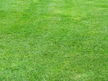 Perfect lawn green grass background Stock Photo