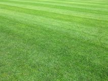 Perfect lawn green grass background. Perfect striped lawn green fresh grass background Stock Photo
