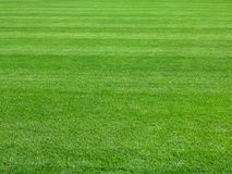 Perfect lawn green grass background. Perfect striped lawn green fresh grass background Royalty Free Stock Photos