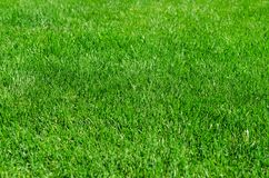 Perfect lawn with green grass Stock Images