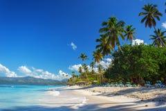 Perfect leeg Caraïbisch zandig strand met duidelijk water en groene palmen stock foto's