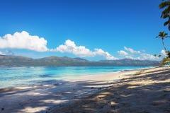 Perfect leeg Caraïbisch zandig strand met duidelijk water en groene palmen stock foto