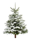 Perfect little Christmas tree in snow Royalty Free Stock Photography