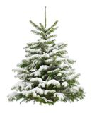 Perfect little Christmas tree in snow Stock Image