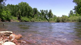 (Perfect Loop) Flowing Downstream River Green Forest stock video footage