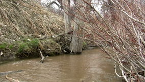 (Perfect Loop) Overflowing Muddy Barren Creek. A barren creek flowing in early spring carrying a muddy sand to match the landscape stock video footage