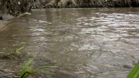 (Perfect Loop) Shallow Sandy Bottom Creek Reflection. A creek with a shallow and sandy bottom reflection shot stock footage