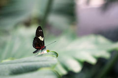 Perfect mały motyl Zdjęcia Stock