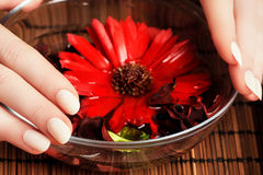 Perfect manicure. Female hands with glass bowl of water Stock Image