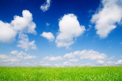 Perfect meadow Royalty Free Stock Photo