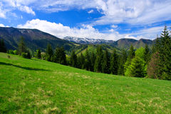 Perfect meadow in mountains. Stock Photos