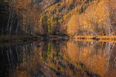 Free Perfect Mirror Reflection Of Mixed Autumn Forest  Birch, Aspen, Larch And  Fir  In Calm Mountain River. Morning In Altai, Siberi Royalty Free Stock Photography - 181791327