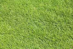 Perfect mown grass Stock Photography