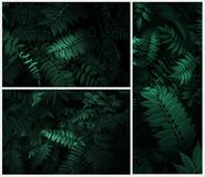 Perfect Natural  leaves Pattern Beautiful Tropical royalty free stock photos