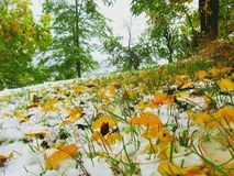 Fall leaves  and snow Royalty Free Stock Photos