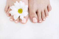 Perfect nude pedicure on white background. And spring flower. Female feet top view with free space. Result of spa salon procedure Stock Photos