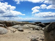 Magnificent view of penguins photographed at Boulders Beach, South Africa