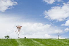 Perfect outdoor nature background Royalty Free Stock Image