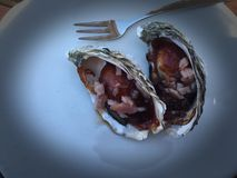 Perfect oysters Royalty Free Stock Images