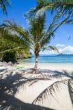 Perfect palm beach Stock Photos