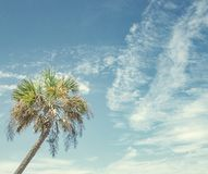 The perfect palm tree on sunny day at the beach stock photography