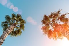 Perfect palm trees against a beautiful blue sky. Su. Palm Trees - Perfect palm trees against a beautiful blue sky. Sunny Stock Photography