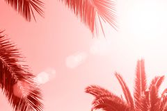 Perfect palm trees against a beautiful sky. Coral color background.  royalty free illustration