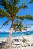 Perfect palmy plaża Zdjęcie Stock