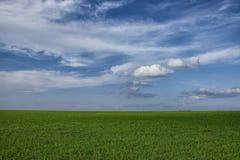 Perfect pasture Royalty Free Stock Photos