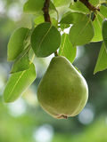 Perfect Pear Royalty Free Stock Photo