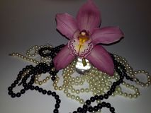 Perfect pink and purple orchid and pearls royalty free stock images